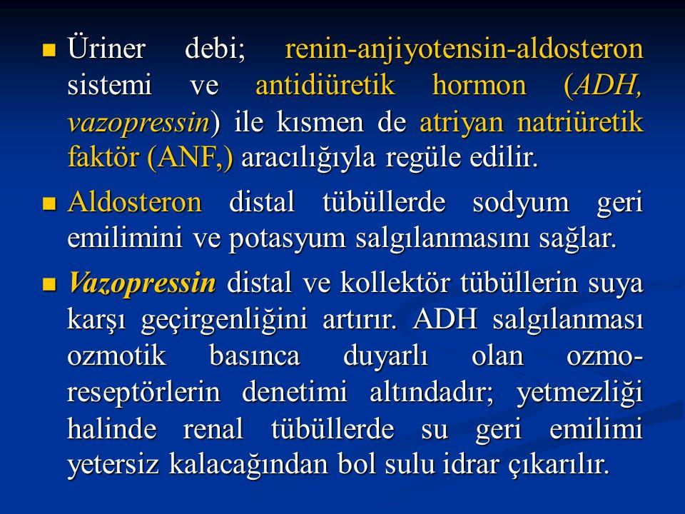 Üriner debi; renin-anjiyotensin-aldosteron sistemi ve antidiüretik hormon (ADH, vazopressin) ile kısmen de atriyan natriüretik faktör (ANF,) aracılığıyla regüle edilir.