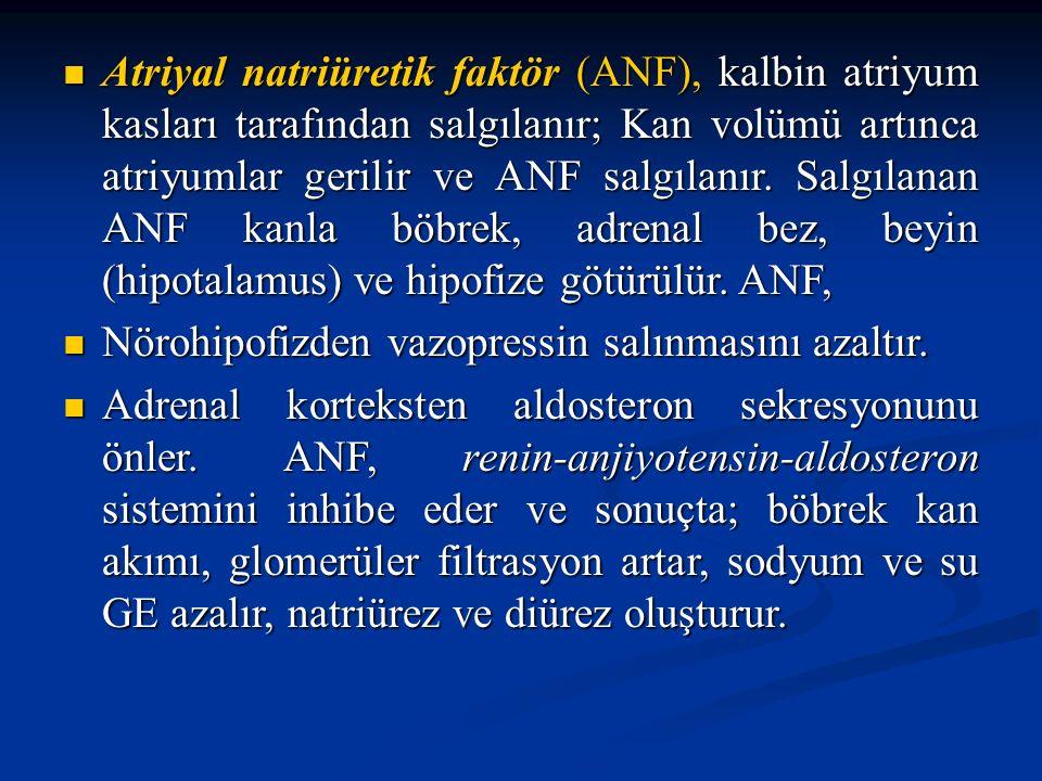 Atriyal natriüretik faktör (ANF), kalbin atriyum kasları tarafından salgılanır; Kan volümü artınca atriyumlar gerilir ve ANF salgılanır. Salgılanan ANF kanla böbrek, adrenal bez, beyin (hipotalamus) ve hipofize götürülür. ANF,