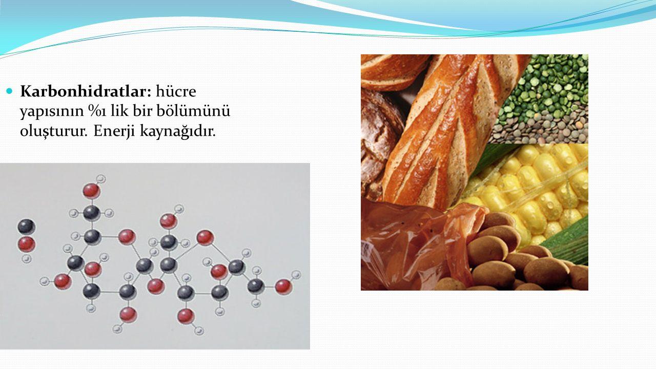 Karbonhidratlar: hücre yapısının %1 lik bir bölümünü oluşturur