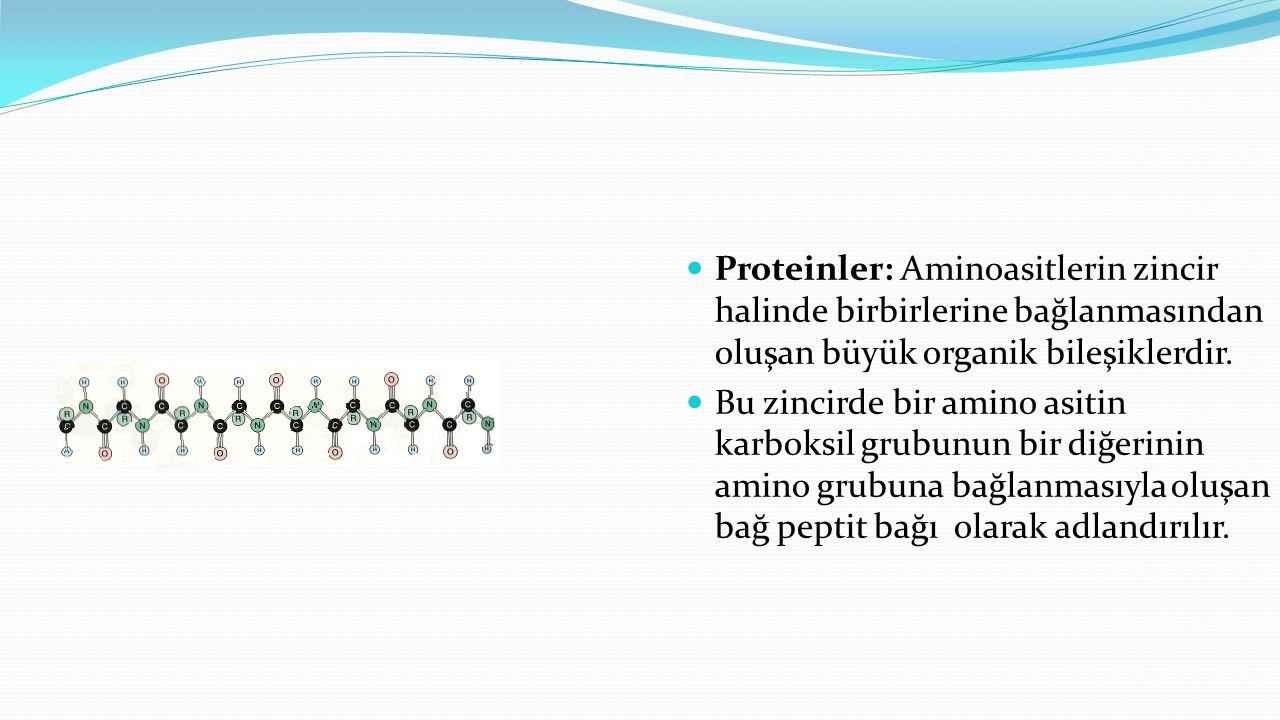 Proteinler: Aminoasitlerin zincir halinde birbirlerine bağlanmasından oluşan büyük organik bileşiklerdir.