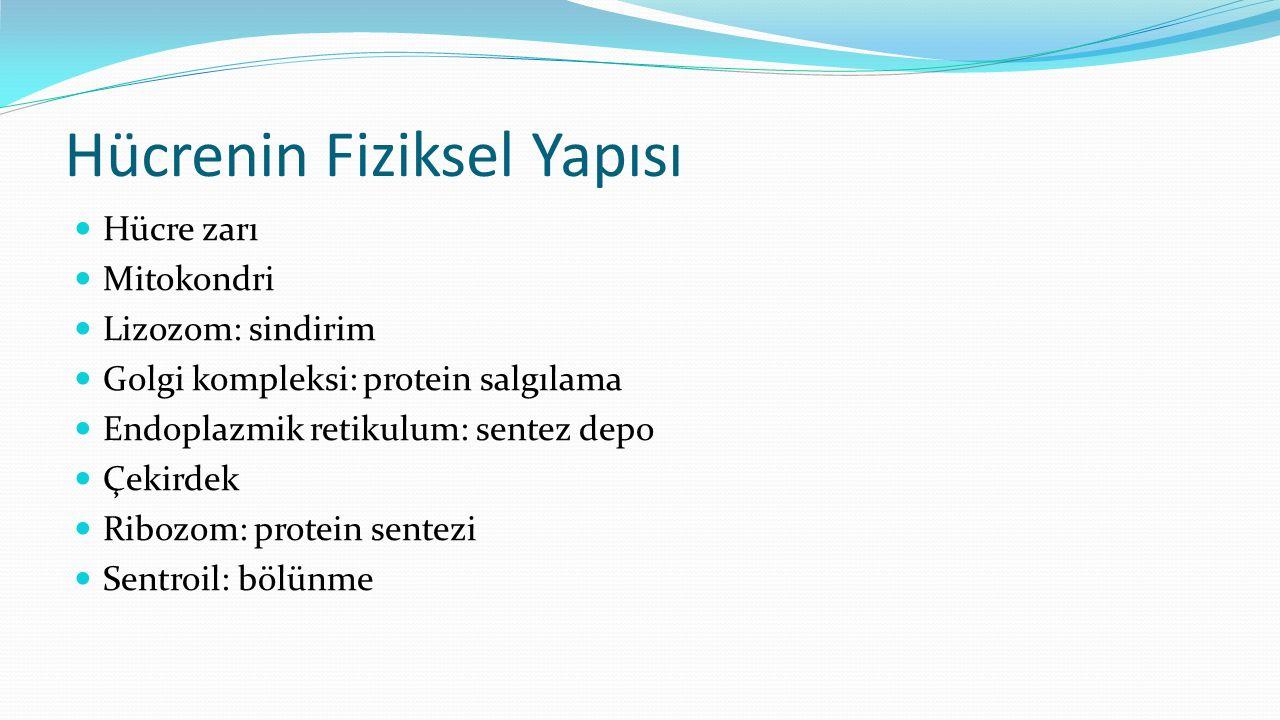 Hücrenin Fiziksel Yapısı