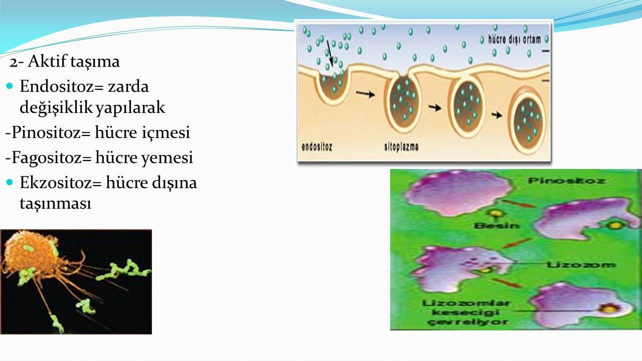 2- Aktif taşıma Endositoz= zarda değişiklik yapılarak. -Pinositoz= hücre içmesi. -Fagositoz= hücre yemesi.
