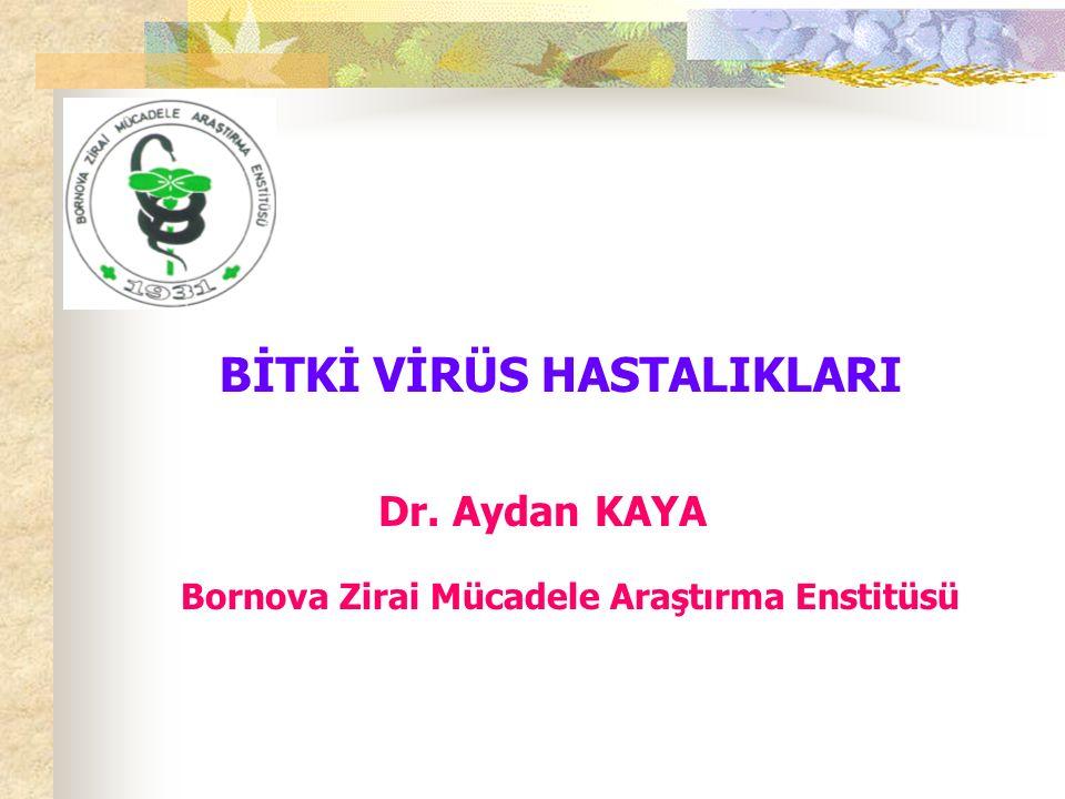 BİTKİ VİRÜS HASTALIKLARI Bornova Zirai Mücadele Araştırma Enstitüsü