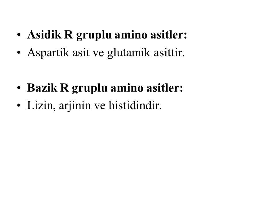 Asidik R gruplu amino asitler: