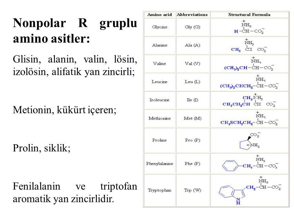 Nonpolar R gruplu amino asitler: