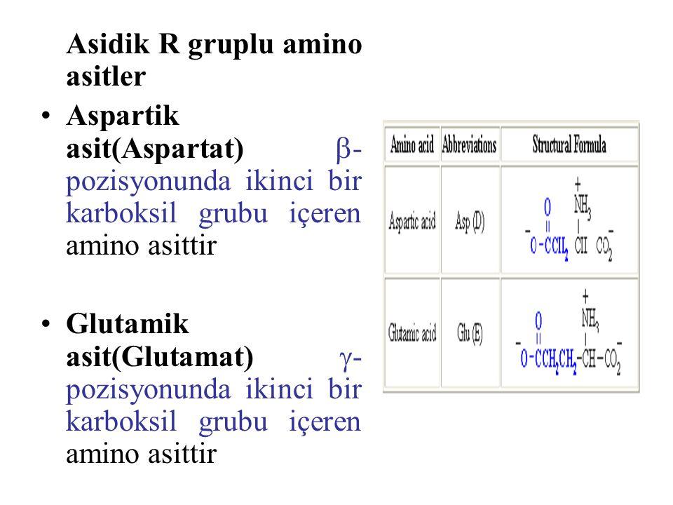 Asidik R gruplu amino asitler