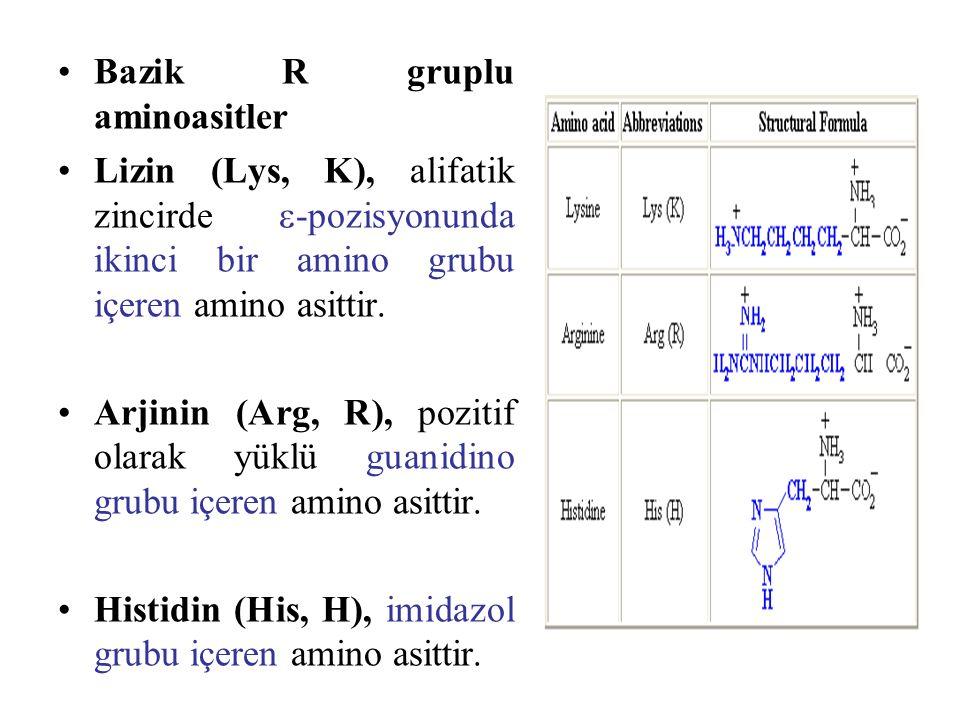 Bazik R gruplu aminoasitler