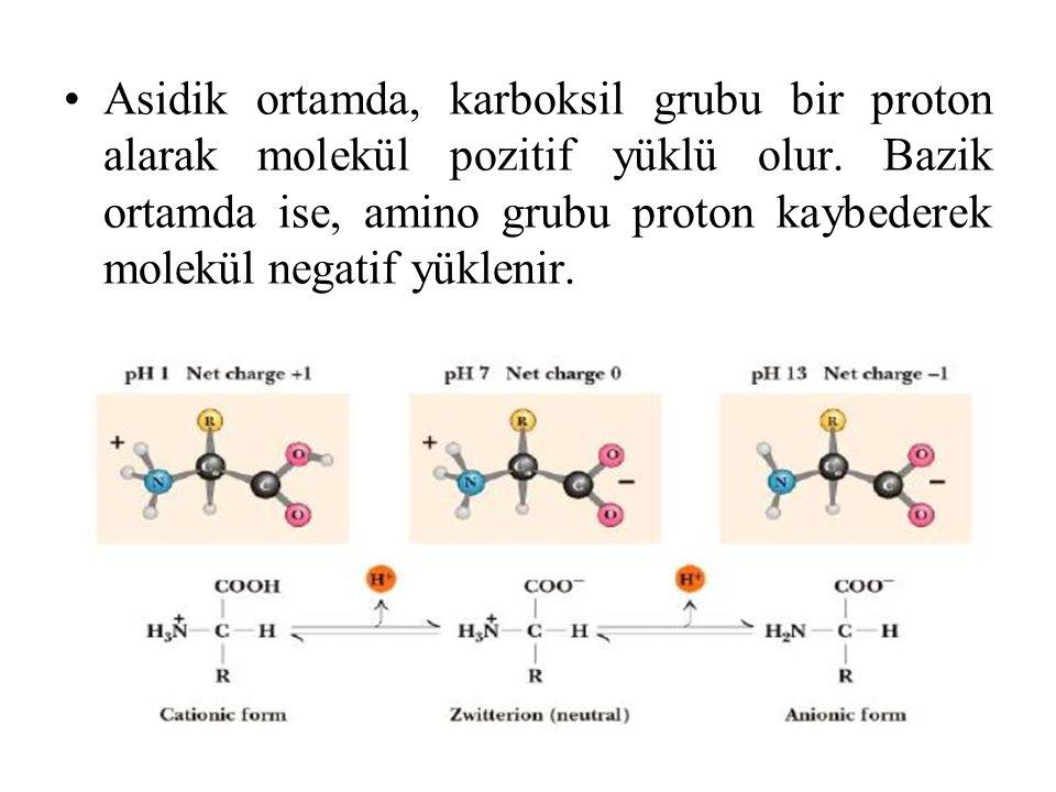Asidik ortamda, karboksil grubu bir proton alarak molekül pozitif yüklü olur.