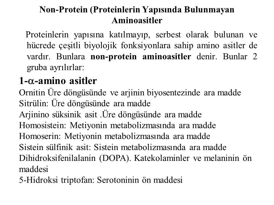 Non-Protein (Proteinlerin Yapısında Bulunmayan Aminoasitler