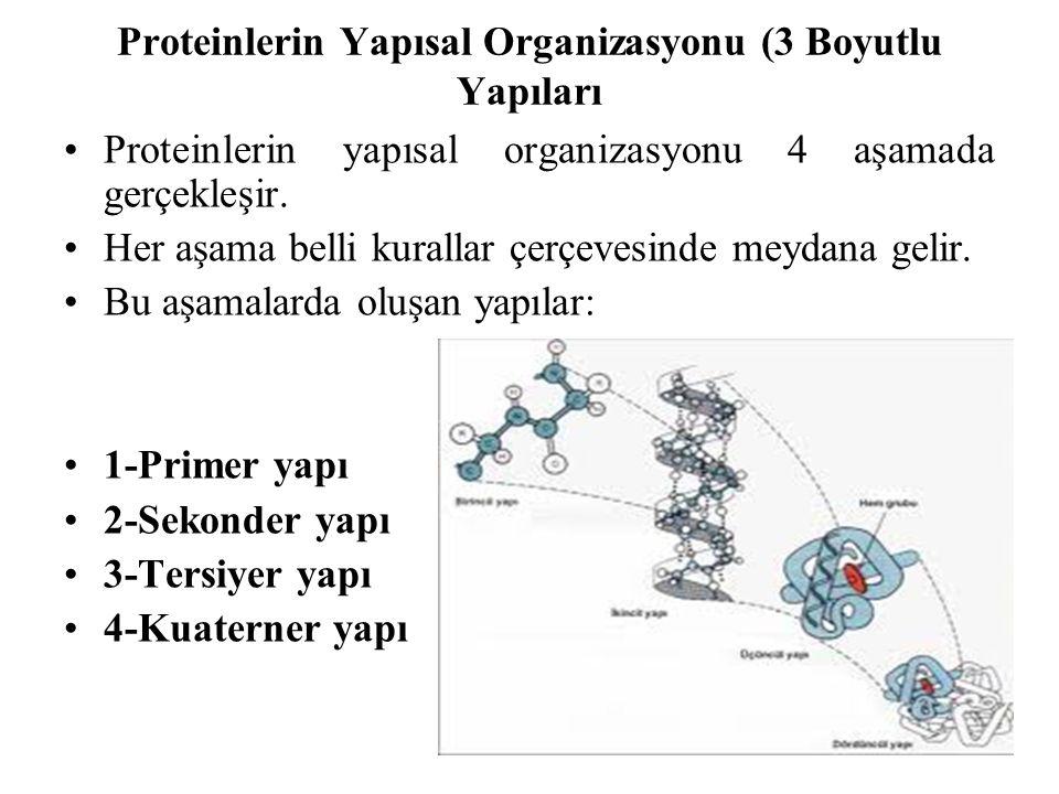 Proteinlerin Yapısal Organizasyonu (3 Boyutlu Yapıları