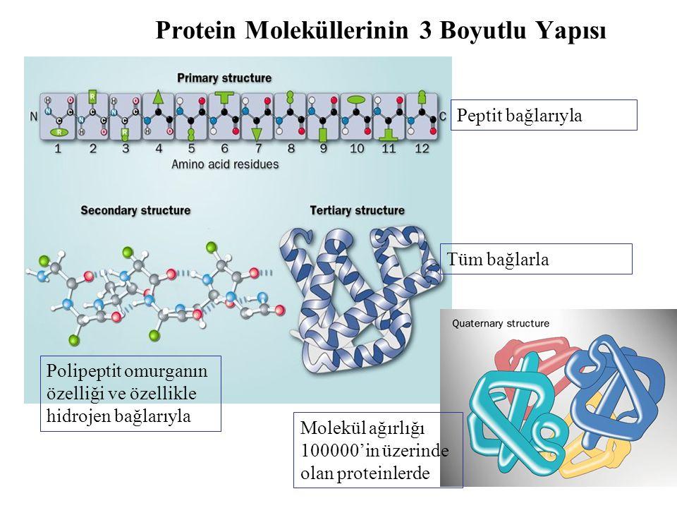 Protein Moleküllerinin 3 Boyutlu Yapısı