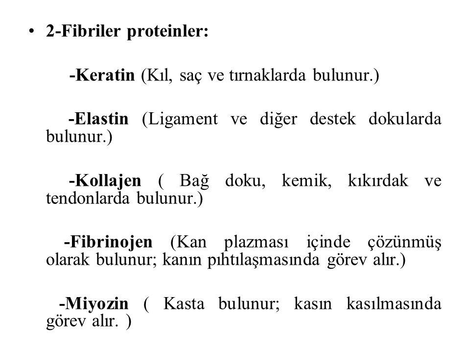 2-Fibriler proteinler: