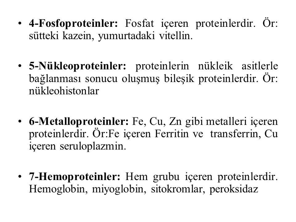 4-Fosfoproteinler: Fosfat içeren proteinlerdir