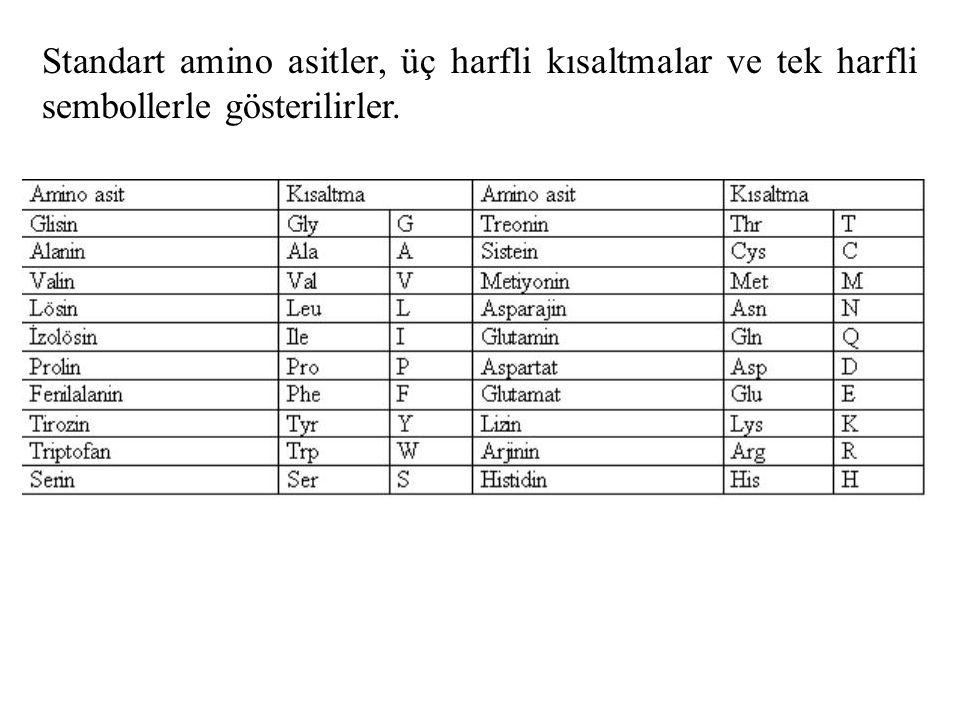 Standart amino asitler, üç harfli kısaltmalar ve tek harfli sembollerle gösterilirler.