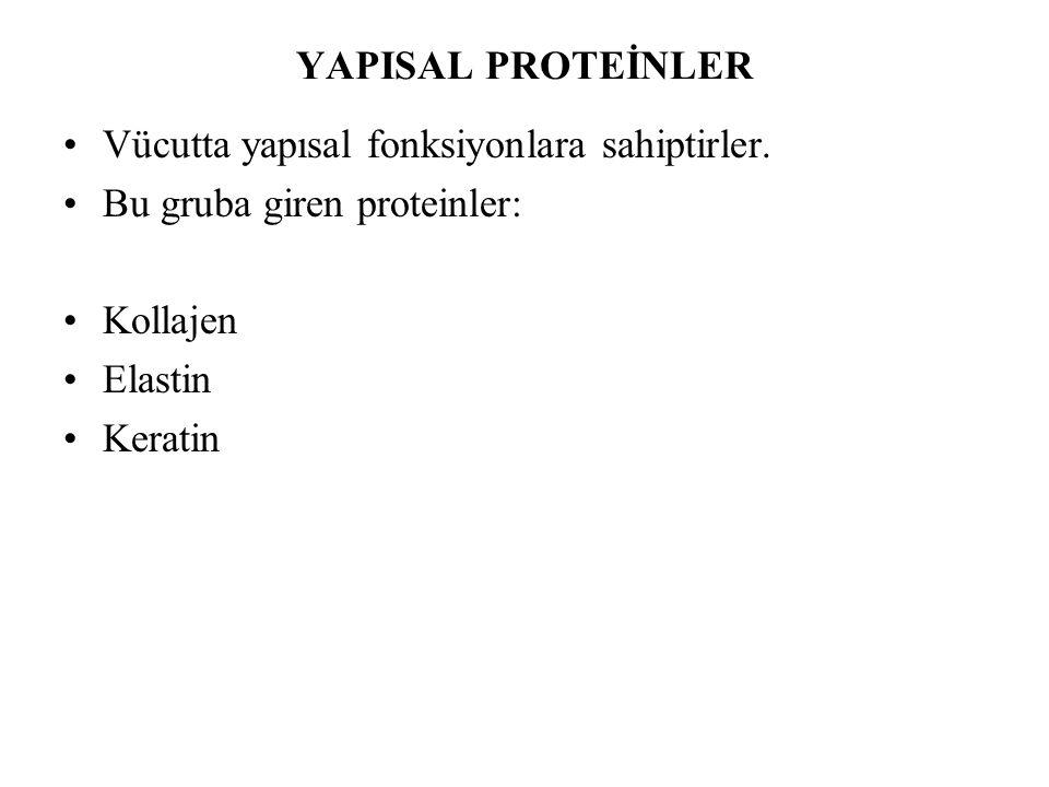 YAPISAL PROTEİNLER Vücutta yapısal fonksiyonlara sahiptirler. Bu gruba giren proteinler: Kollajen.