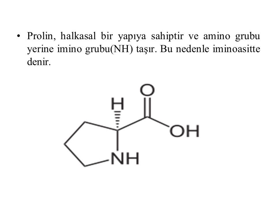 Prolin, halkasal bir yapıya sahiptir ve amino grubu yerine imino grubu(NH) taşır.