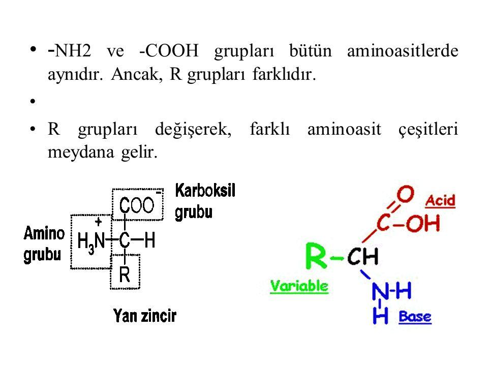 -NH2 ve -COOH grupları bütün aminoasitlerde aynıdır
