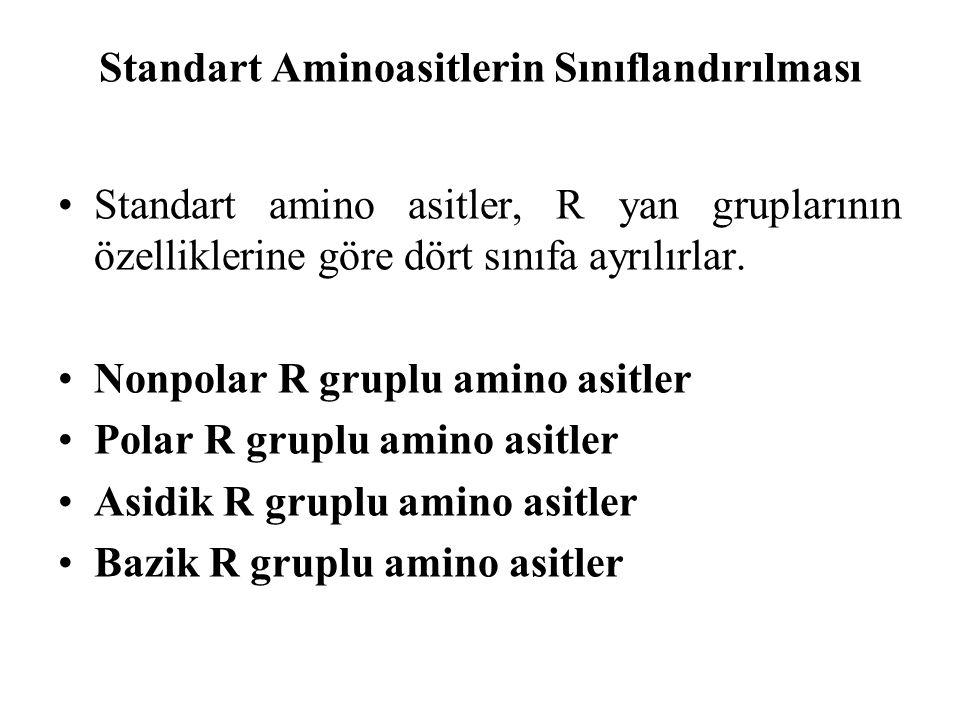 Standart Aminoasitlerin Sınıflandırılması