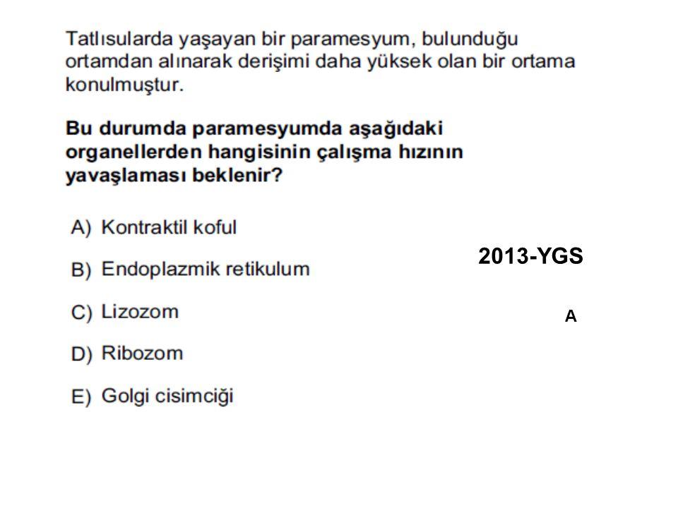 2013-YGS A