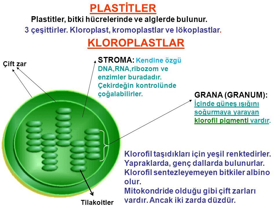 PLASTİTLER KLOROPLASTLAR