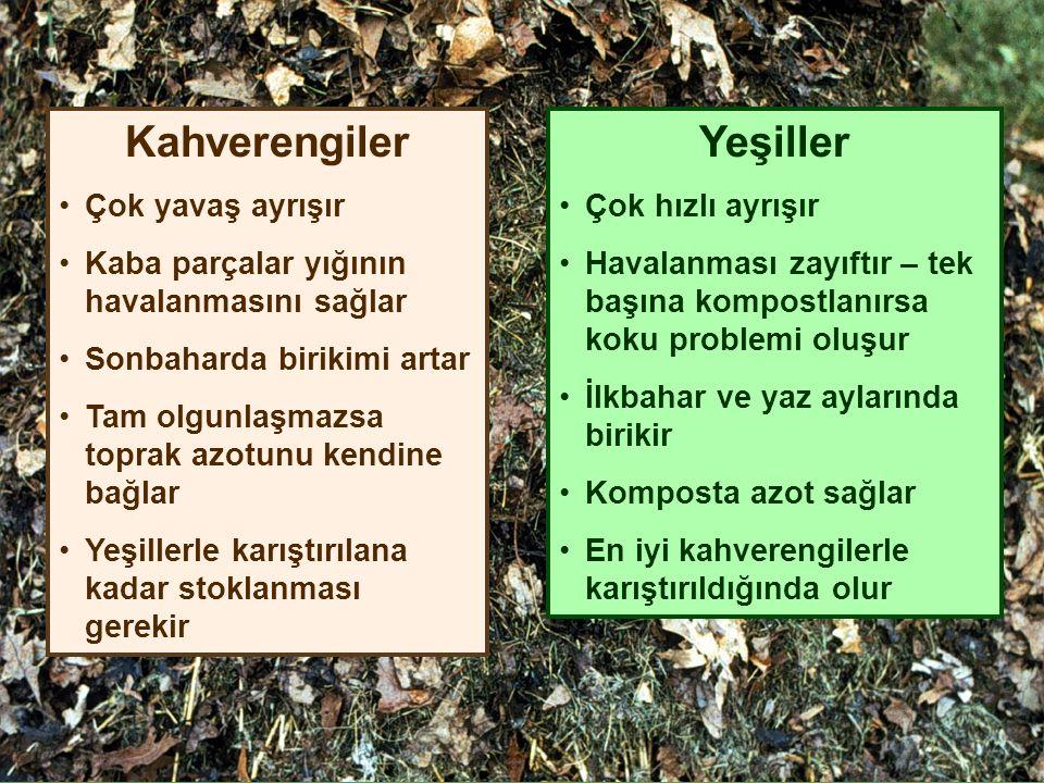 Kahverengiler Yeşiller