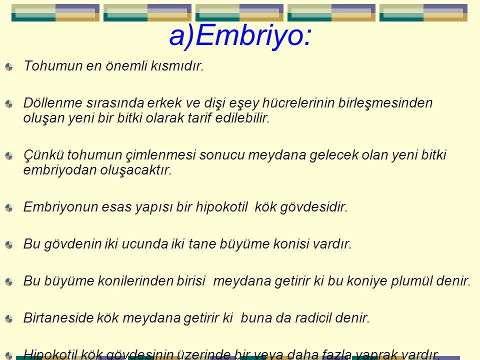 a)Embriyo: Tohumun en önemli kısmıdır.