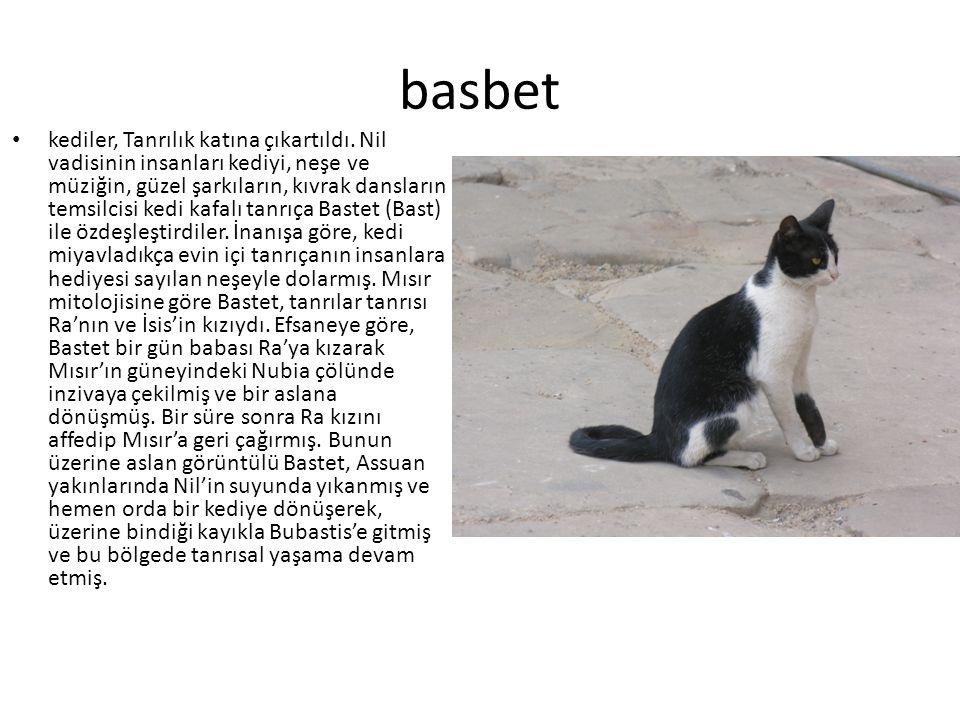 basbet