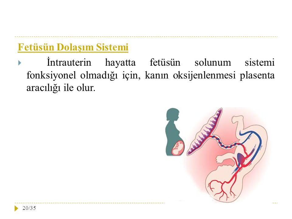 Fetüsün Dolaşım Sistemi
