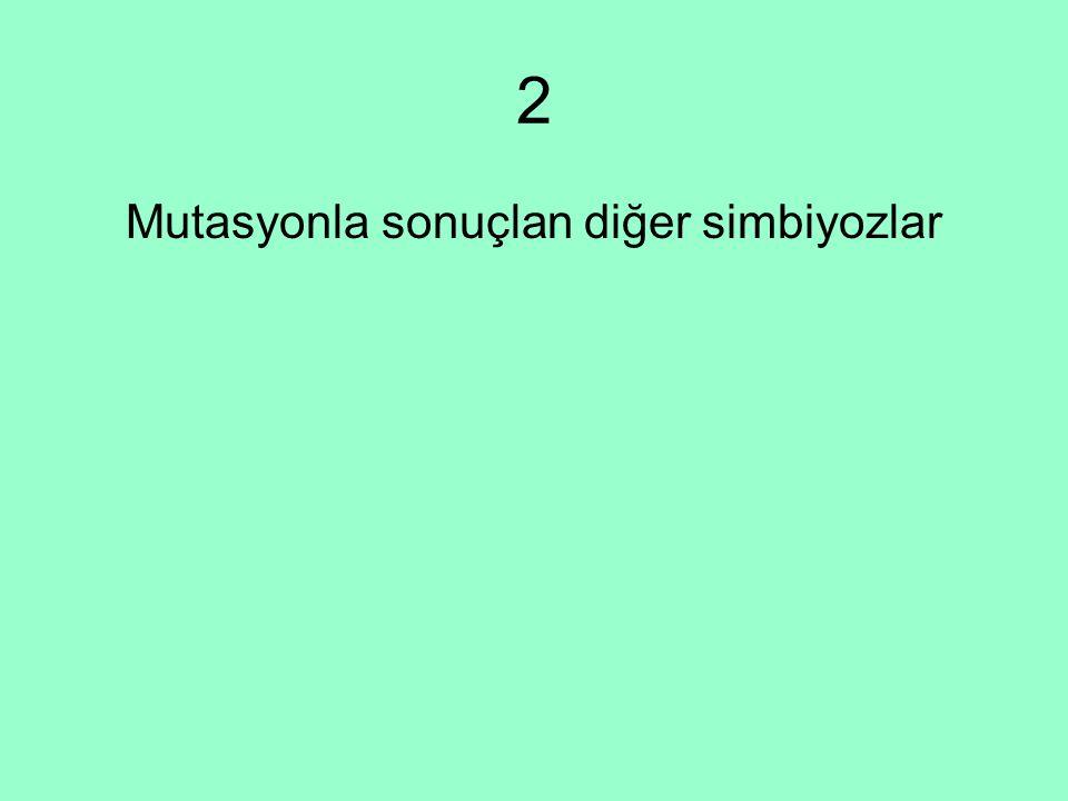 Mutasyonla sonuçlan diğer simbiyozlar