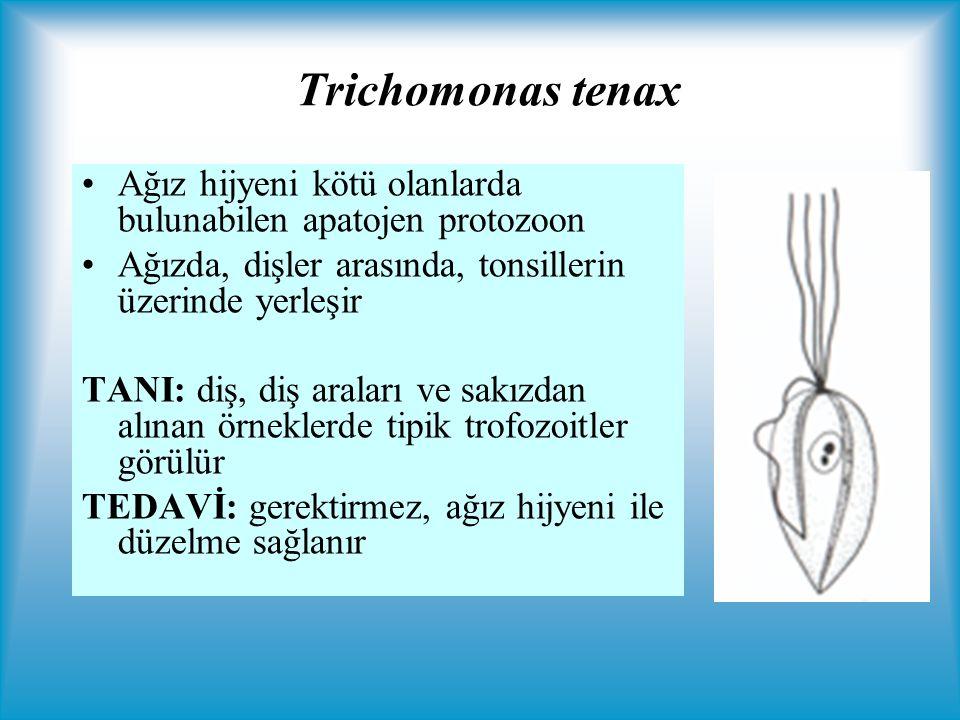 Trichomonas tenax Ağız hijyeni kötü olanlarda bulunabilen apatojen protozoon. Ağızda, dişler arasında, tonsillerin üzerinde yerleşir.