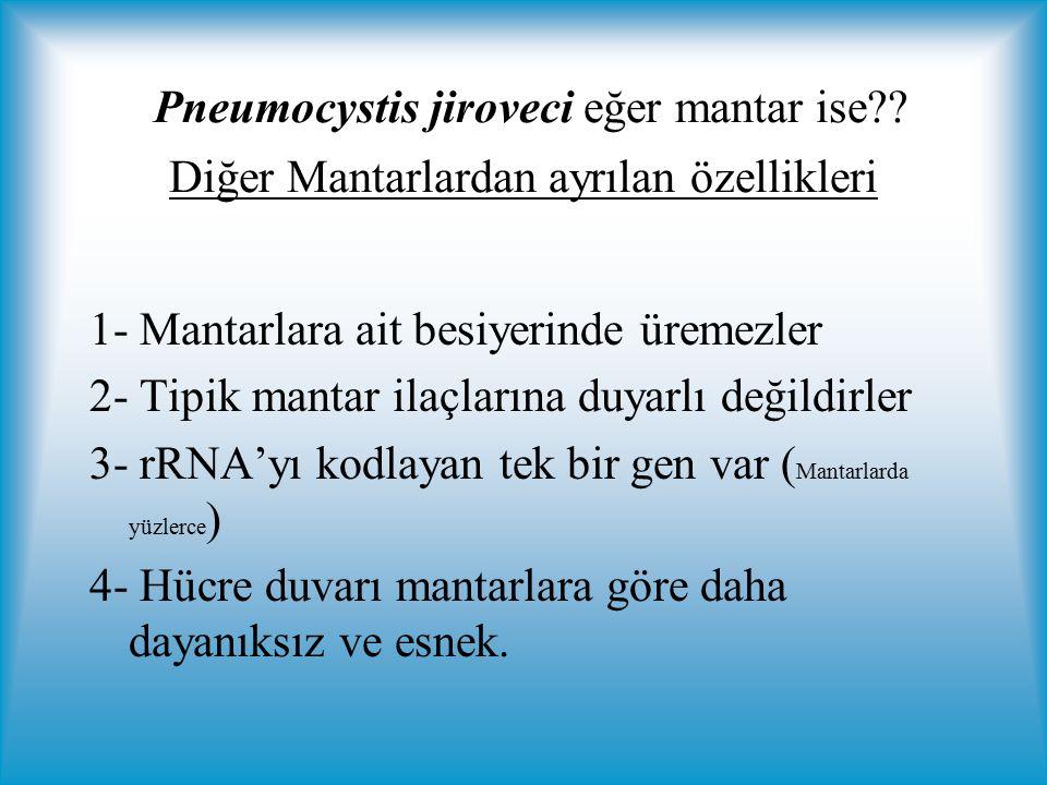 Pneumocystis jiroveci eğer mantar ise