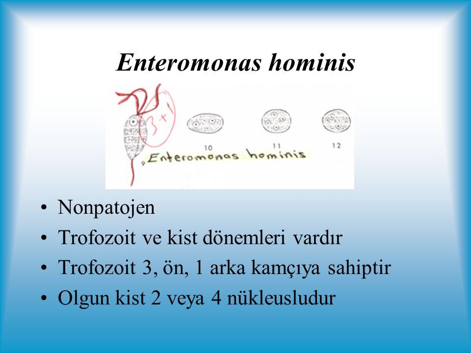 Enteromonas hominis Nonpatojen Trofozoit ve kist dönemleri vardır