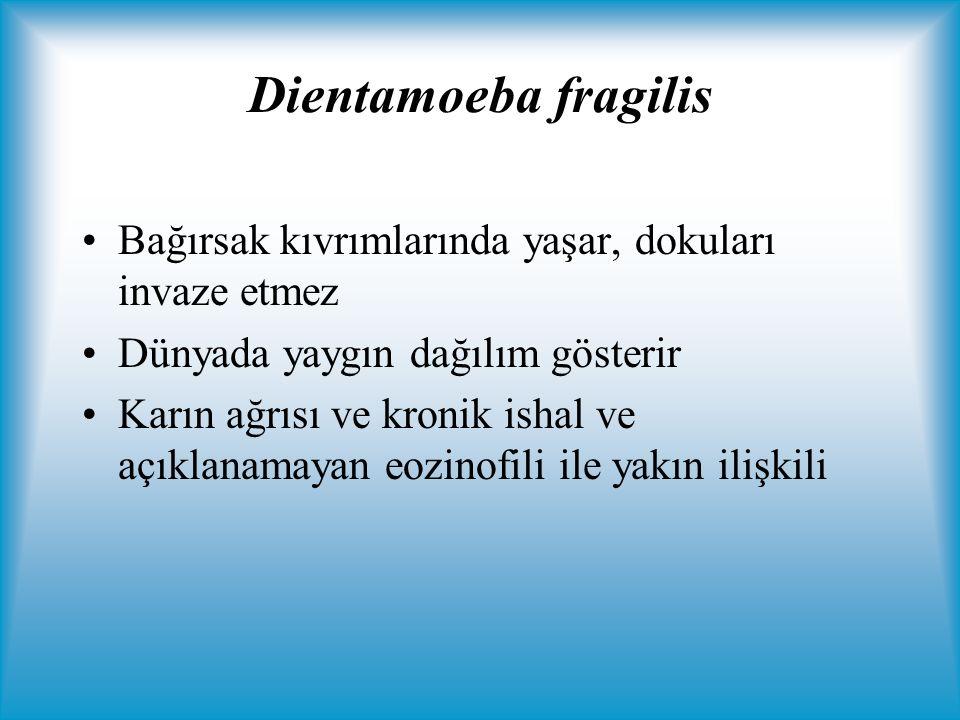 Dientamoeba fragilis Bağırsak kıvrımlarında yaşar, dokuları invaze etmez. Dünyada yaygın dağılım gösterir.