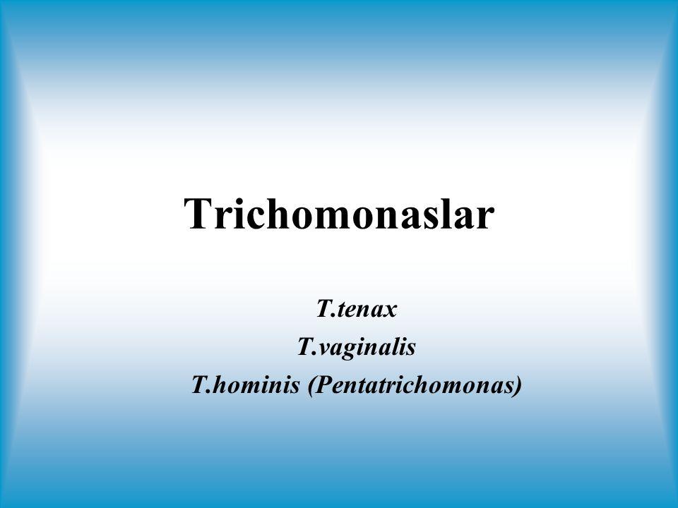 T.tenax T.vaginalis T.hominis (Pentatrichomonas)
