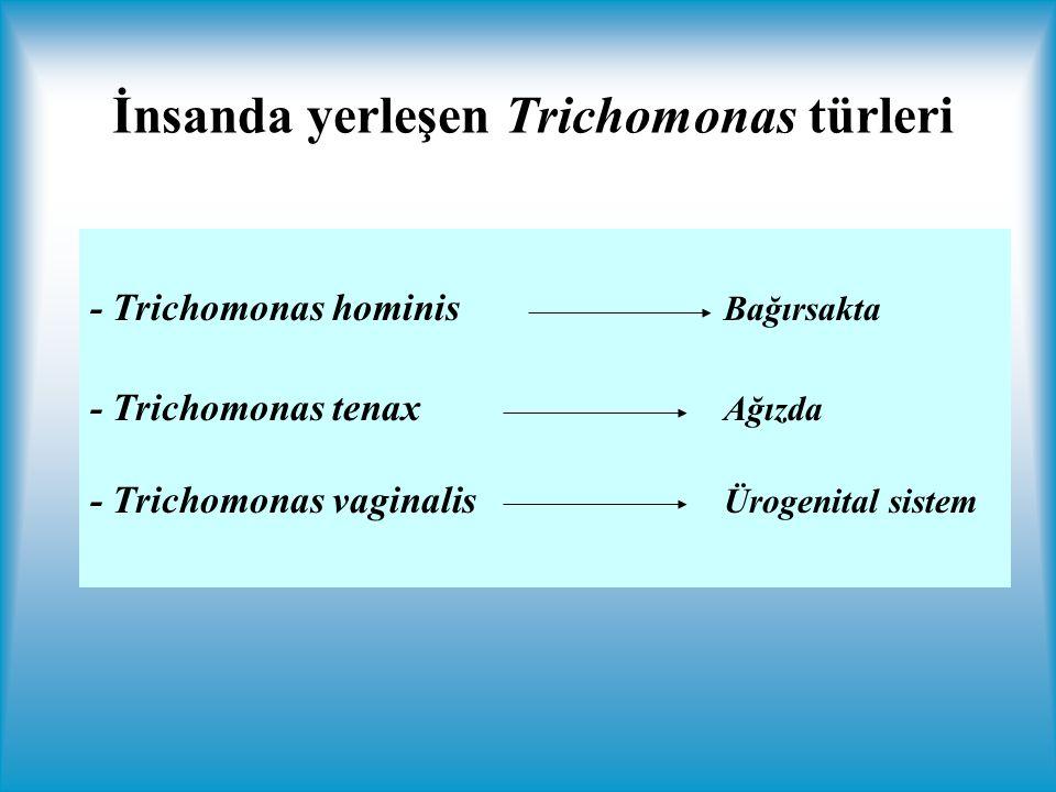 İnsanda yerleşen Trichomonas türleri