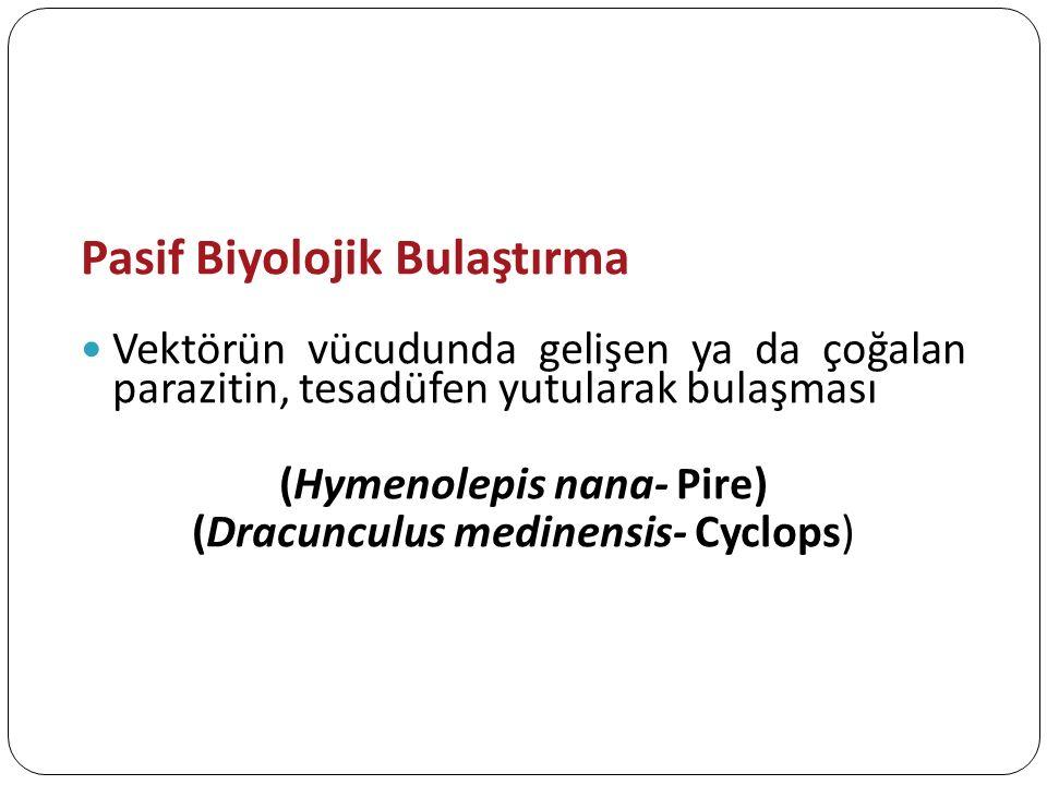 (Hymenolepis nana- Pire)