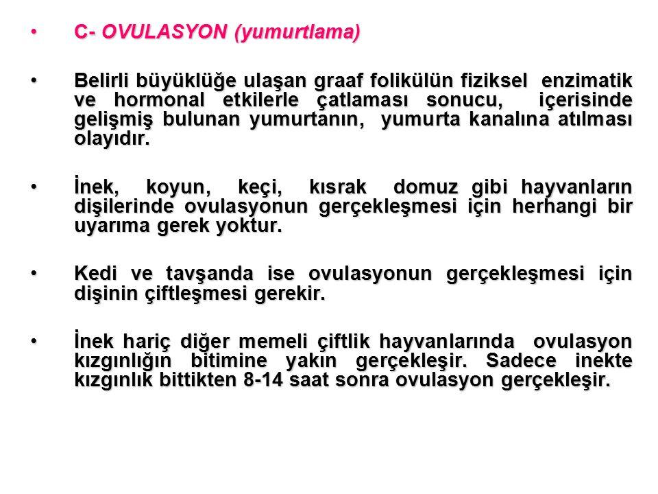 C- OVULASYON (yumurtlama)
