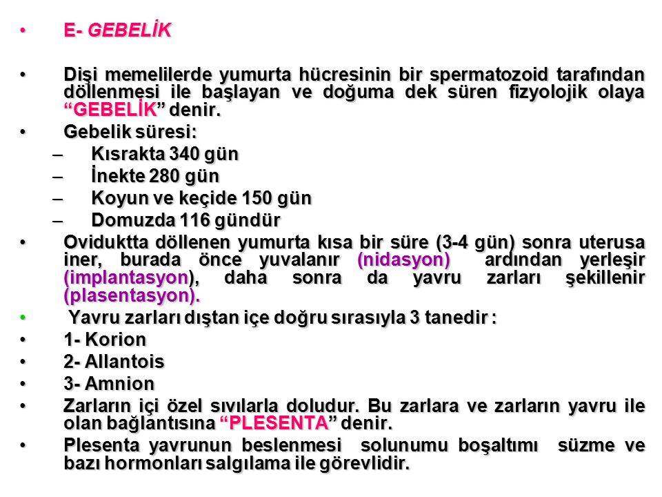 E- GEBELİK