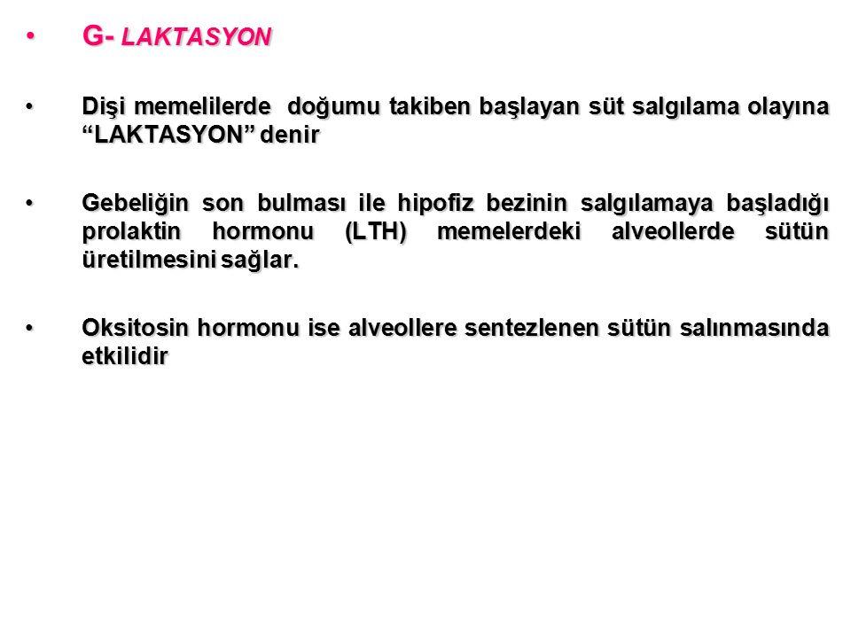 G- LAKTASYON Dişi memelilerde doğumu takiben başlayan süt salgılama olayına LAKTASYON denir.