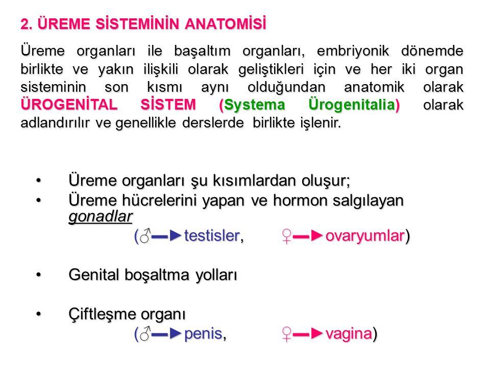 Üreme organları şu kısımlardan oluşur;