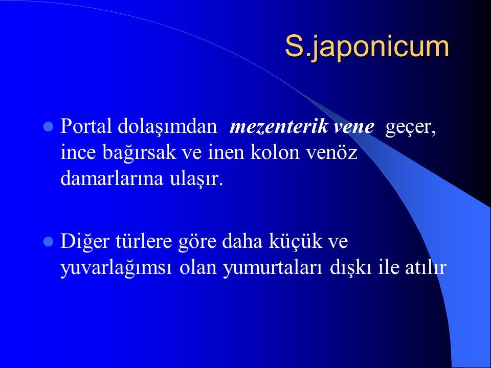 S.japonicum Portal dolaşımdan mezenterik vene geçer, ince bağırsak ve inen kolon venöz damarlarına ulaşır.