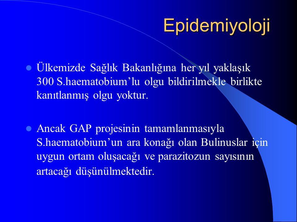 Epidemiyoloji Ülkemizde Sağlık Bakanlığına her yıl yaklaşık 300 S.haematobium'lu olgu bildirilmekle birlikte kanıtlanmış olgu yoktur.