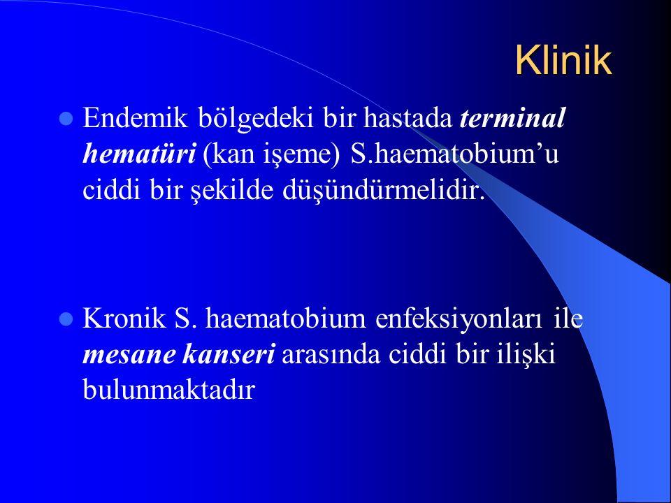 Klinik Endemik bölgedeki bir hastada terminal hematüri (kan işeme) S.haematobium'u ciddi bir şekilde düşündürmelidir.