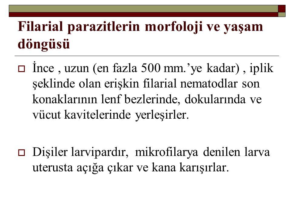 Filarial parazitlerin morfoloji ve yaşam döngüsü