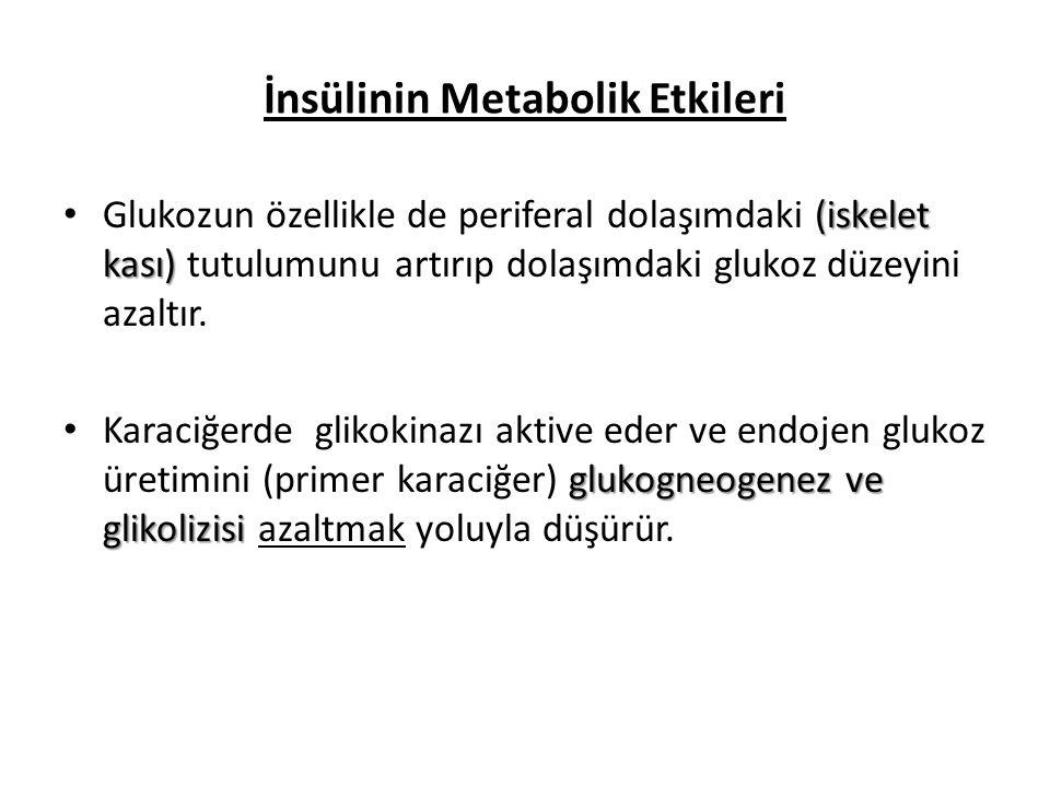 İnsülinin Metabolik Etkileri
