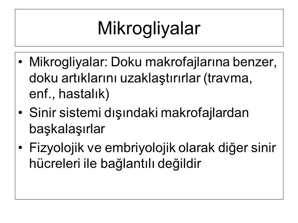 Mikrogliyalar Mikrogliyalar: Doku makrofajlarına benzer, doku artıklarını uzaklaştırırlar (travma, enf., hastalık)