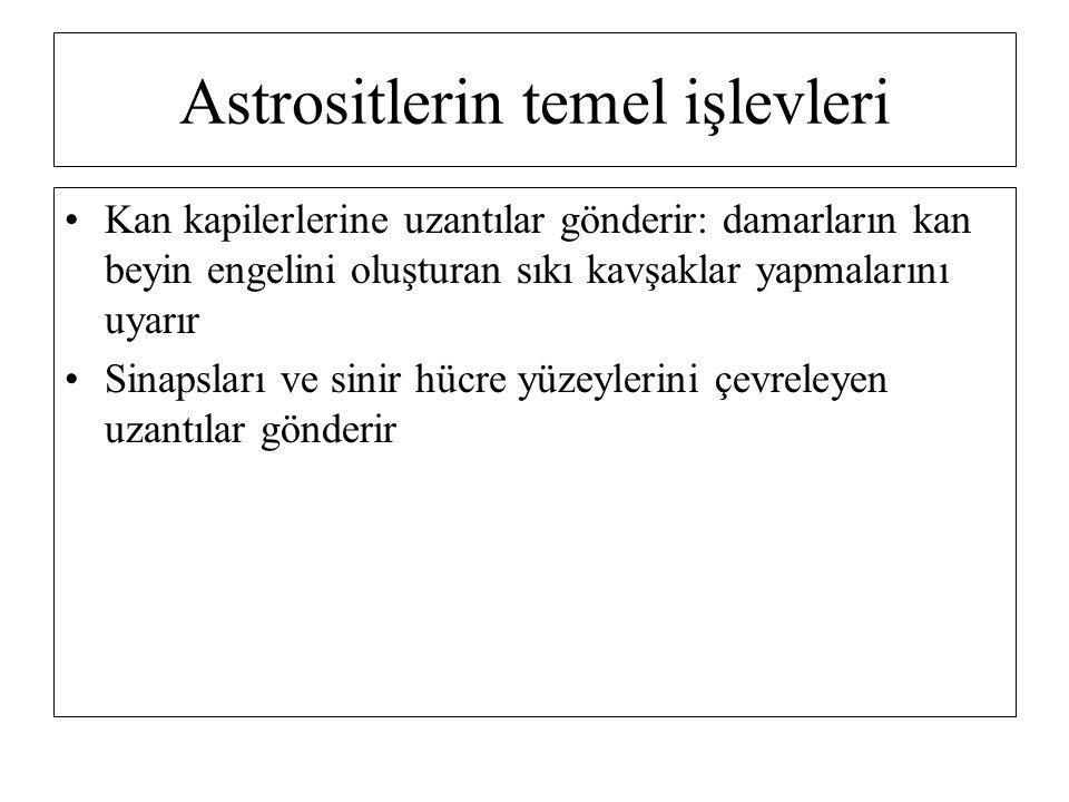 Astrositlerin temel işlevleri