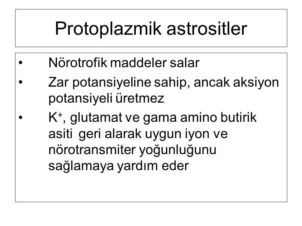 Protoplazmik astrositler