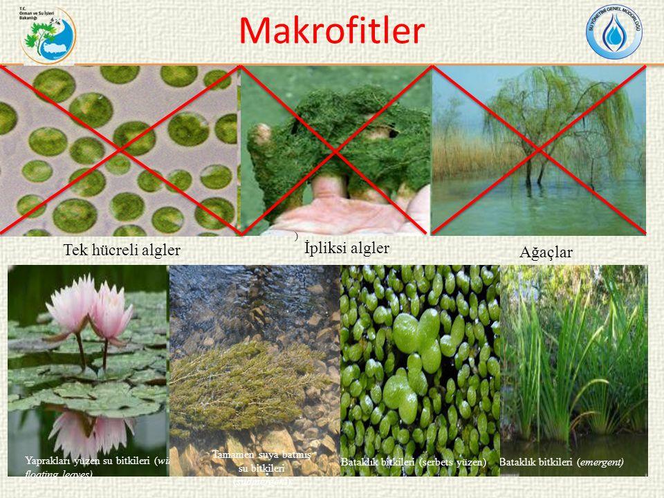 Tamamen suya batmış su bitkileri (submergent)