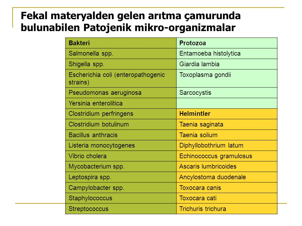 Fekal materyalden gelen arıtma çamurunda bulunabilen Patojenik mikro-organizmalar